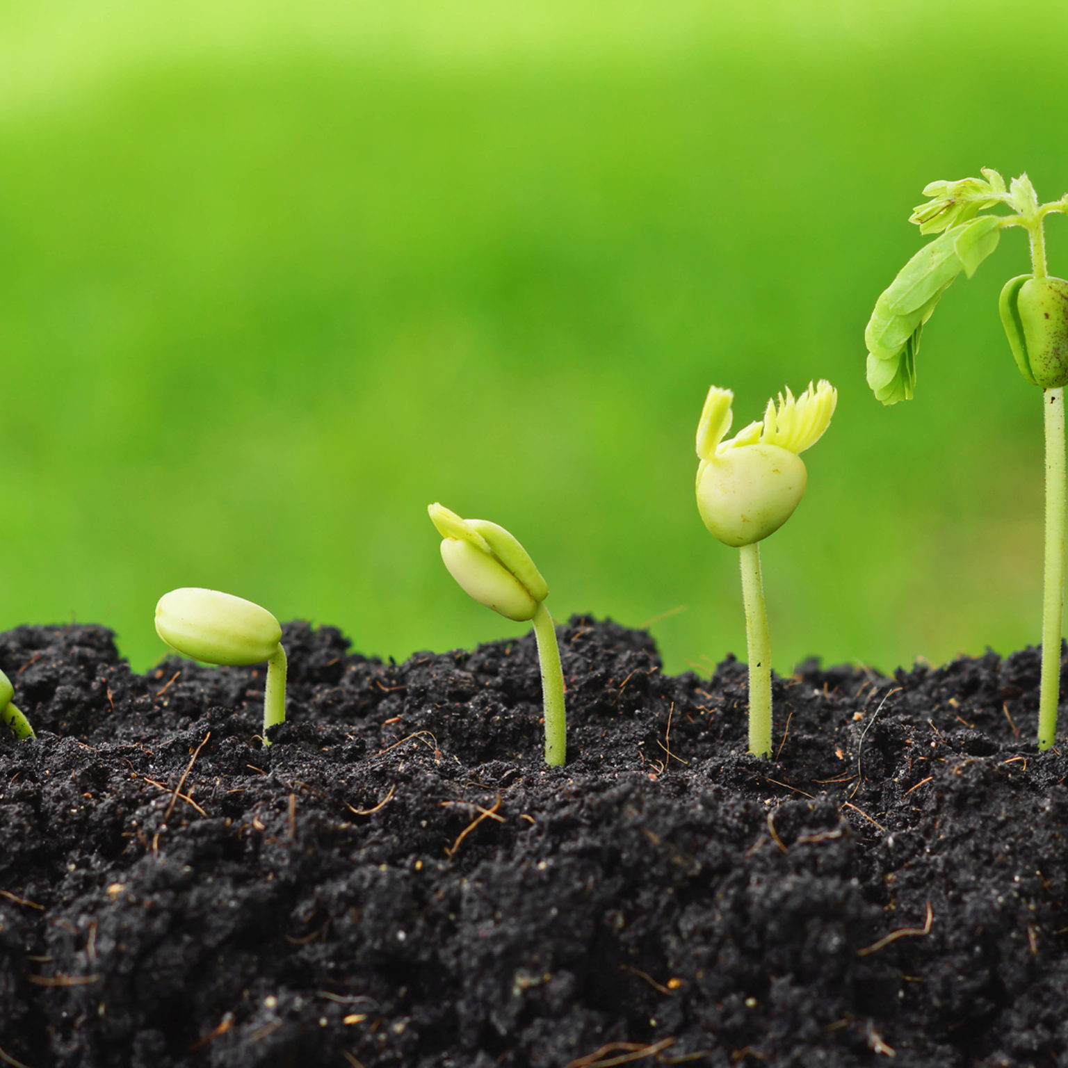 plants growing in sequence of seed germination on soil, evolution concept